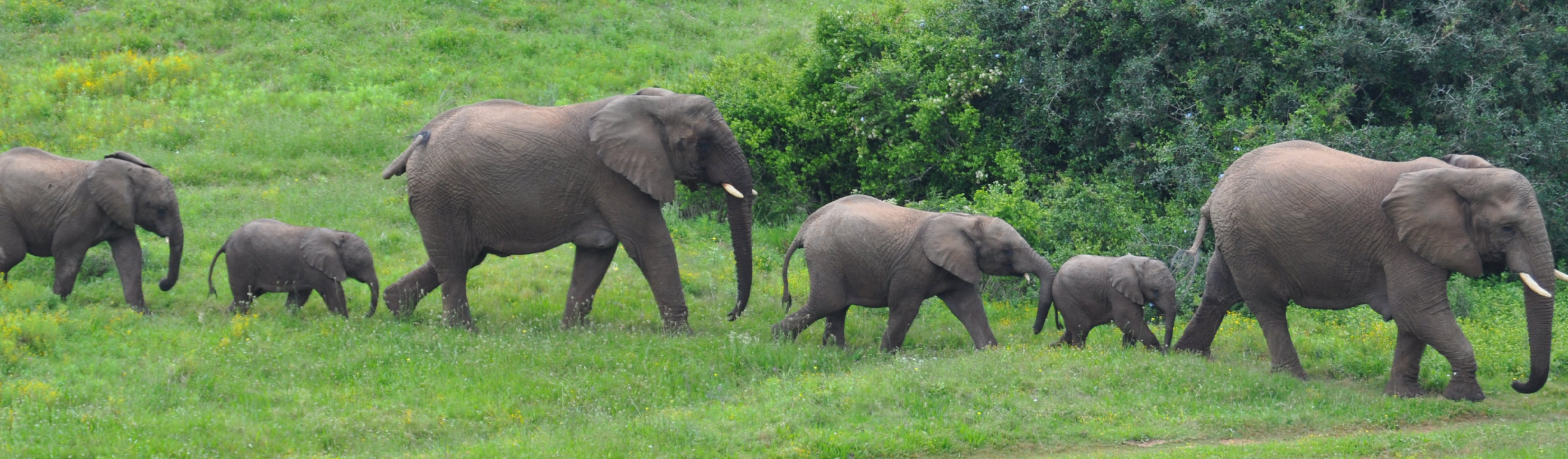 Hopewell Private Game Reserve Elephants
